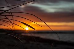 Sonnenaufgang (Thomas-Stuebben-Foto) Tags: fehmarn sun light beach strand sonne licht ostsee balticsea stuebbileinus