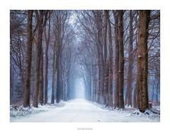 Zwarteweg (Black road) (http://www.paradoxdesign.nl) Tags: zwarteweg lage vuursche utrecht netherlands nederland holland landscape landschap road lane trees snow winter sneeuw koud cold mist bomen natuur