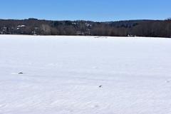 Snow-covered field (pedrik) Tags: farmington connecticut usa snow winter d7200 nikkorafsdx35mmf18g gimp landscape