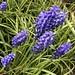 Marcro tiny blue flowers