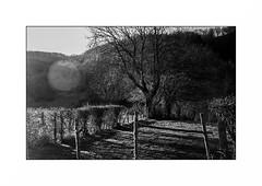 Le Morvan (Punkrocker*) Tags: nikon s2 rf rangefinder nikkor 50mm 5014 sc film kodak tmax 400 nb bwfp monochrome campagne campaign morvan bourgogne france trees tree arbres