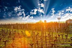 coucher de soleil sur les vignes de Saint Emilion (Florent Péraudeau) Tags: coucher de soleil sur les vignes saint emilion luminar 2018 skylum aurora 2019 canon eos 1d 1 d mk mark iv 4 24105 24 105 f4 f is usm florent péraudeau flox papa nouvelle aquitaine
