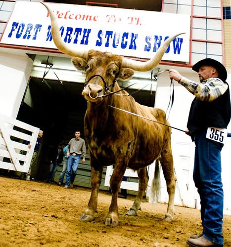 Stock show Longhorns 2009015.JPG