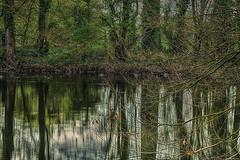 Newells Pond (akatsoulis) Tags: reflections fishingpond pond landscape countryside uk greatbritain manfrottobefree nikkor50mm14g nikond5300 nikon ascottpark stadhampton medievalvillageofascot oxford oxfordshire