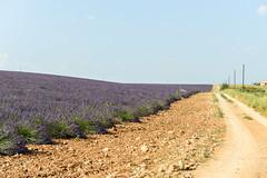 DSC_9657-20 (aehnattapol) Tags: france lavender building shop landscape uk england europe eifel farm blue sky green