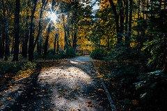 Autumn in old Park (Unicorn.mod) Tags: 2018 autumn october sunlight sun park tree trees path pathway leaves canoneos6d canon samyang samyang35mmf14asumc manuallens manual manualshooting