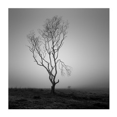 Big brother is watching (Nick green2012) Tags: tree square blackandwhite mist silence minimalism dartmoor