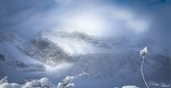 Depuis les hauteurs du lac d'Annecy (Didier HEROUX) Tags: hiver winter paysage landscape alpes alps alpi alpen 74 flickr raw leica panasonic météo saison hautesavoie alpesdunord montagne mountains didierheroux herouxdidier évasion rando randonnée neige snow brume ciel sky outdoor extérieur annecy lac tournette massif janvier 2019 blanc sommets nature passion europe europa auvergnerhonealpes savoie flocon brouillard froid frost