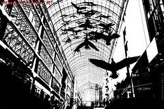 """Konsumtempel"" (Cologne Cam Authentic Art) Tags: art kunst urban city street streetshot streetphoto streetphotography people blackandwhite blackwhite bw schwarzweiss monochrome bwphotography light contrast abstract toronto canada kanada mall bird"