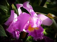 """""""1001 orchidées"""" - 2 (Raymonde Contensous) Tags: paris jardindesplantes grandeserre orchidées fleurs nature plantes expositions"""