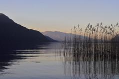 Un beau dimanche au bord de l'eau.    2 (Evim@ge) Tags: lac lake paysage landscape reflet reflection eau water quiet calme outside extérieur roseau roseaux roselière coucherdesoleil sunset soir evening savoie lebourget