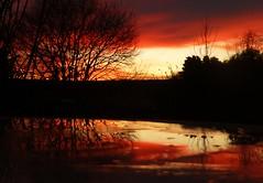 Across the Pond..x (Lisa@Lethen) Tags: bird bath water sunrise weather nature frozen ice cloud sun scotland