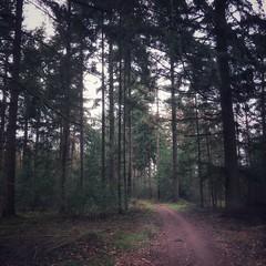 dark forest (Jos Mecklenfeld) Tags: outdoor wandelen hiking netherlands groningen westerwolde terapel roelagebos natuur nature bos forest