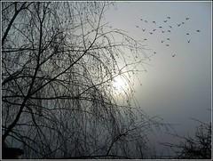 Early Birds .. (** Janets Photos **) Tags: uk hull sunrise mistymornings fog birds