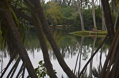 Screwpines silhouette lake at Fairchild (jungle mama) Tags: lake fairchild water screwpine free composition fairchildtropicalbotanicgarden fairchildgarden susanfordcollins pandanus pandanusutilis proproot iguana pandanuslake madagascarscrewpine