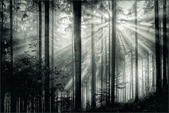 A new day is starting (Eva Haertel) Tags: eva haertel travel reisen natur nature landscape landschaft woodland forest wald bäume trees nadelbäume evergreen monochrom himmel sky light licht schatten shadow sun sunlight sonne sonnenlicht sonnenstrahlen sunbeams tschechischerepublik czechrepublic czech tschechisch semily