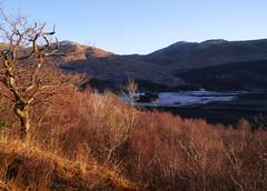 Glasdrum National Nature Reserve (Niall Corbet) Tags: scotland argyll nnr nationalnaturereserve glasdrum