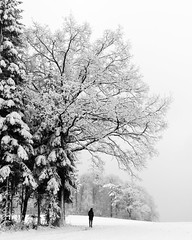 Standing under the tree (ramvogel) Tags: sony a6300 sony18105mm zürich snow blackwhite bw winter tree clouds mist fog forest
