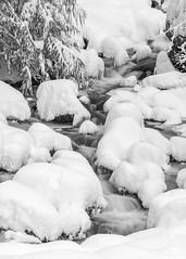 DSC00384 (andreavarju) Tags: bw bnw monochrome blackandwhite snow landscapephotography landscape longexposure nature naturephotography sony sonyalpha sonyphotography sonya6300 stream winter water