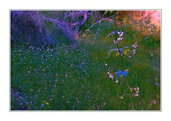 Time (Christina's World!) Tags: landscape light leaves woods flowers frame dark dusk sunset grasses vegetation vines california colorful dramatic dreamy fragile garden green gold goldenhour glow galleriadarte impressionism impressionistic kurtpeiser mood meadows outdoors painterly plants sandiego scenic textures tree unitedstates usa