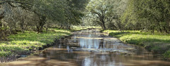 panorama of water stream in Llano, TX (Largeguy1) Tags: landscape water panorama canon 5dsr sigma 85mm f14 dg hsm art lens