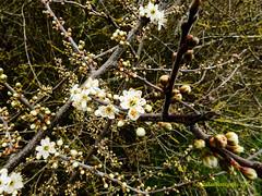 Spring time #3 (DigitalKen Photography) Tags: nikon nature spring flowers