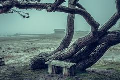 The Wooden Bench (J. Pelz) Tags: beach tree nature gotland bench idyllic weather sweden beautiful
