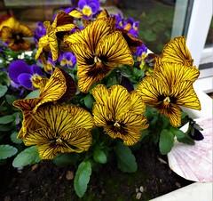 P1080584 (KENS PHOTOS2010) Tags: flowers gardens gardening