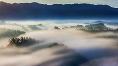 Sea of clouds (Isaac Chiu_TW) Tags: seaofclouds sunrise sunlight landscapes taiwan tainan taiwanmt bamboo foggy clouds canon canonphotography