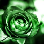 Redux 2018 - Green Rose thumbnail