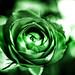 Redux 2018 - Green Rose