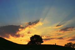 Munich - Downhill... (cnmark) Tags: germany munich bavaria deutschland bayern münchen olympiapark olympiaberg sunset sonnenuntergang silhouette tree baum light licht clouds wolken park outdoors ©allrightsreserved