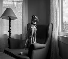 Small Dog (Dan Brekke) Tags: