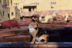 Chouara Tannery, Fès,  Morocco, January 2019 D810 996 (tango-) Tags: fes fez marocco morocco maroc 摩洛哥 marruecos марокко المغرب
