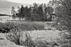 Snow (Stefano Rugolo) Tags: stefanorugolo pentax smcpentaxm50mmf17 landscape snow monochrome countryside barn tree grass manualfocuslens manualfocus vintagelens primelens field sky woods
