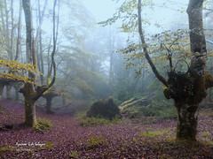 Niebla en el bosque (azucena G. De Salazar) Tags: lainoa niebla fog florest basquecountry basoa bosque euskadi euskalherria urkiola bizkaia
