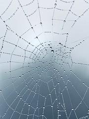 Watery Web (tanith.watkins) Tags: web water drops spidersweb