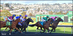 2019 El Camino Real Derby - Golden Gate Fields (billypoonphotos) Tags: oakland tapeta golden gate fields berkeley jockey horse racing thoroughbred dirt track photo picture photography photographer billypoon billypoonphotos nikon d5500 18140mm nikkor news stretch win finish synthetic race 18140 mm anothertwistafate el camino real derby juan hernandez blaine wright preakness 2019 kentucky sign kingly
