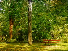 Des arbres et un banc (v o y a g e u r) Tags: trees arbres arboles bench banc seat green vert verdure greenery verde parc park lonely alone september autumn