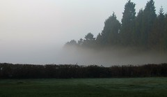 A day of contrasts (scrappy annie) Tags: spring penn penncommon wolverhampton mist morningmist