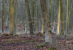 Morning Light on the Trees (Rachel Dunsdon) Tags: 2019 hampshire blackwood forest morninglight