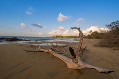 Drift Wood (Nikhil Ramnarine) Tags: caribbean tobago blackrockbeach stonehaven sunset driftwood postcard beach clouds travel nikon d500