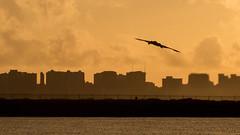 190114-F-WU042-0004 (Whiteman AFB) Tags: usaf whiteman b2 pacom pacaf stracom air force hickamairforcebase hawaii unitedstates us