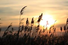 35 (Nils Stolpmann) Tags: landscape nature sea ocean boats yachts clouds sky sun sunrise sunset birds light sunlight nautic