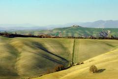 Colline in Toscana (Darea62) Tags: outside landscape countryside tree hills cretesenesi pievina asciano tuscany italy fields winter inverno siena paesaggio panorama nature agriculture waves farm