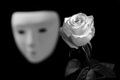 still-life 19-02-2019 004 (swissnature3) Tags: stilllife macro flowers light rose