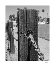 Nexus (agianelo) Tags: wood post metal chain cob web hff fence monochrome bw bn blackandwhite