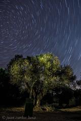OLIVO NOCTURNO (juan carlos luna monfort) Tags: arbol olivera night noche nocturna lightpainting tripode estrellas startrails polar polaris circumpolar linterna largaexposicion lasenia nikond7200 irix15 calma paz tranquilidad