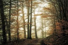 To everything there is a season (Rita Eberle-Wessner) Tags: wald forest woods herbst autumn fall laub leaves blätter baum bäume tree trees waldweg forestpath trail laubblätter nebel fog atmosphere atmosphäre stimmung stimmungsvoll mystisch mystic magic