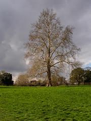 Hatchlands-M4036005 (tony.rummery) Tags: branches epm1 hatchlands historic house landscape mft microfourthirds nationaltrust olympus pen sky spring tree guildford england unitedkingdom gb